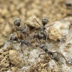 肉やアリ、ダンゴムシはカナヘビの餌に適切か?