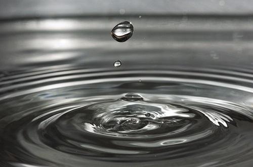 カナヘビ 卵 水滴