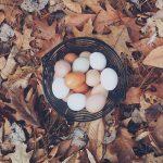 カナヘビの卵はどれ?卵の見分け方